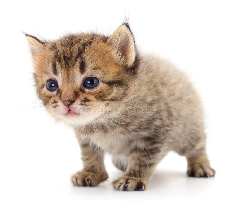 Kitten on white background stock photo