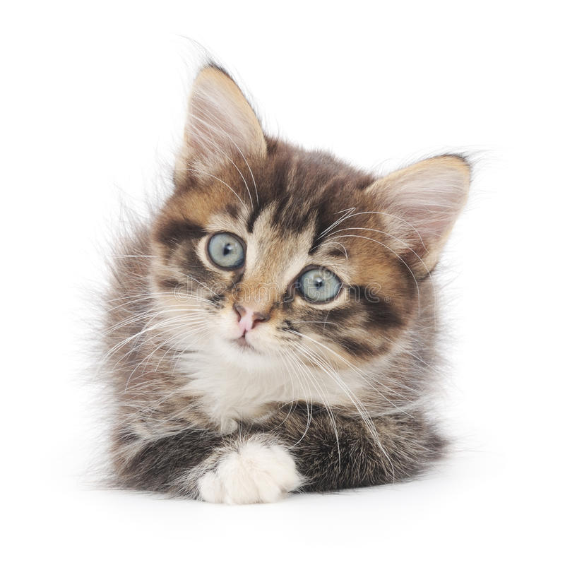 Download Kitten On A White Background Stock Photo - Image of beautiful, small: 33068880