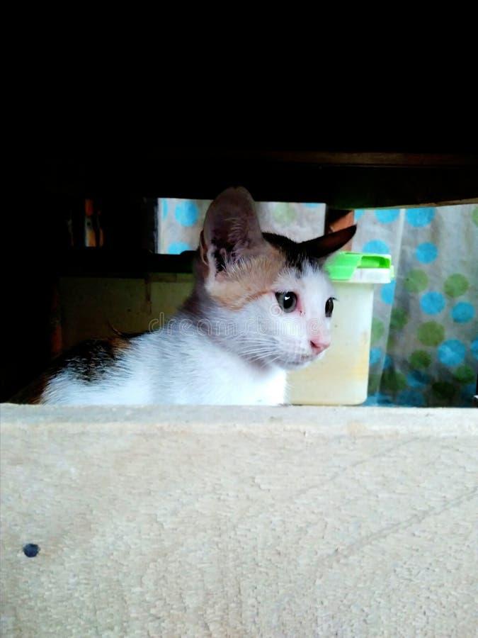 Kitten Who sta deplorando la tristezza fotografia stock