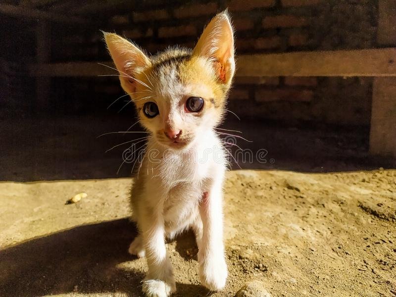 kitten who is waiting for breakfast in the morning stock images