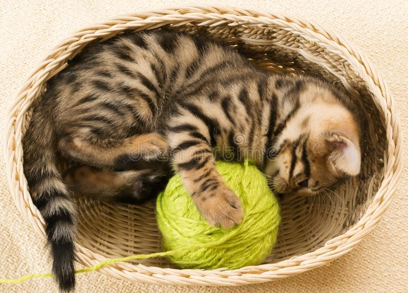 A kitten winds a ball of threads lying in a goat royalty free stock photography
