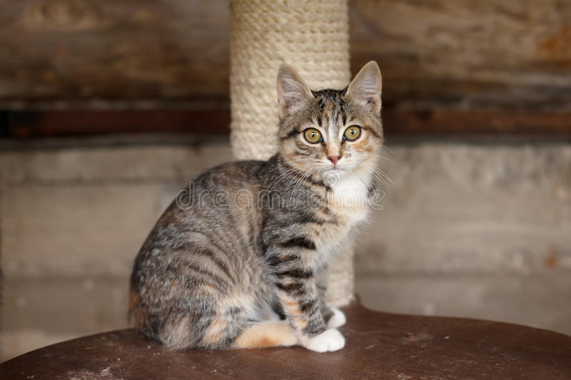 Kitten on a wooden chair royalty free stock photo