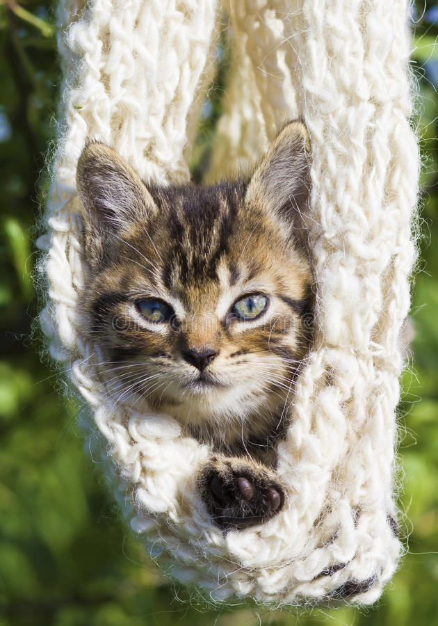 Kitten in a woven cocoon royalty free stock photography