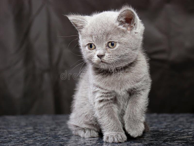 Kitten25 photographie stock