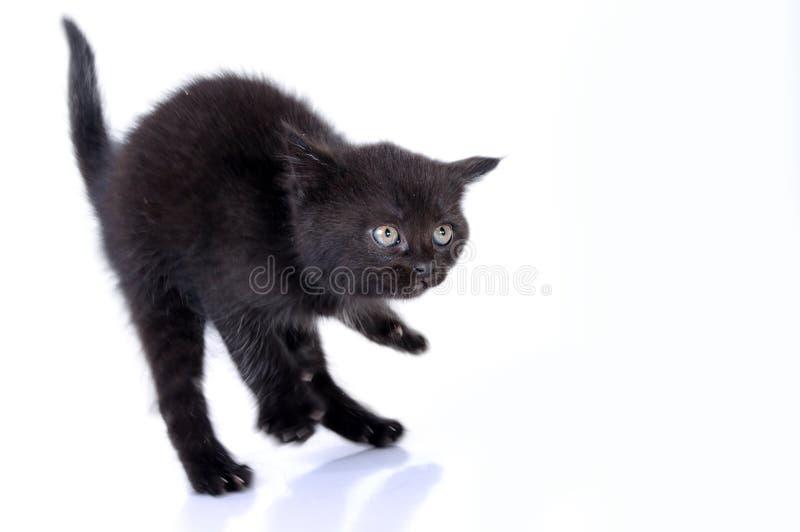 Kitteng Springen stockfotos