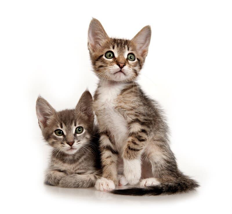 Kittens stock photos