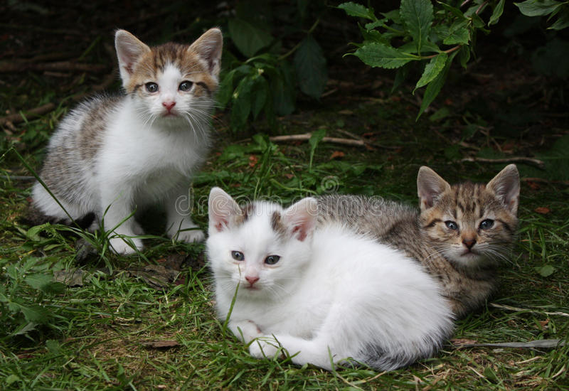 Kittens stock photo