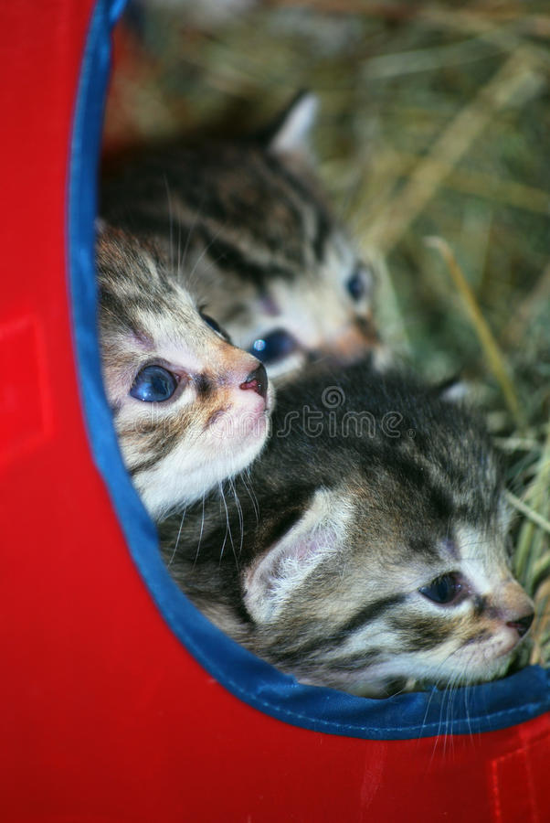 Download Kittens stock image. Image of feline, kittens, eyes, group - 15924537