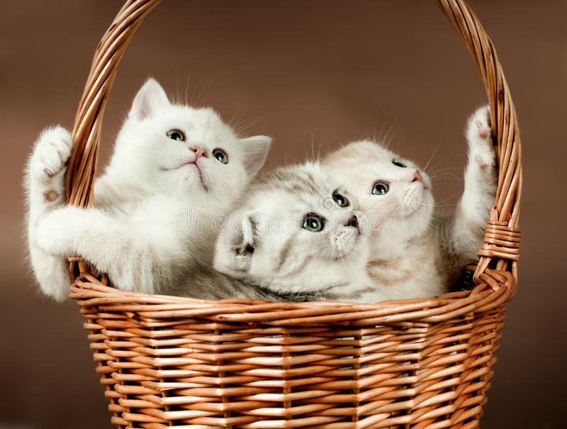 Kittens royalty free stock photography