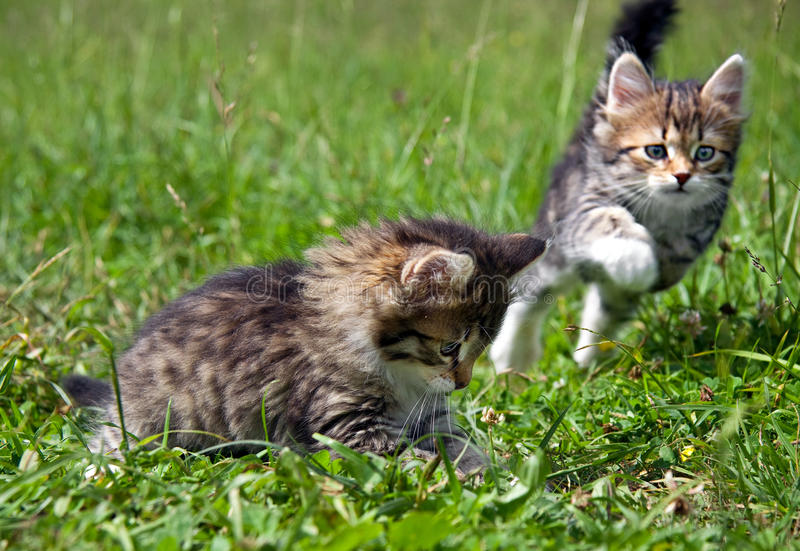 Download Kittens stock photo. Image of animal, grass, expression - 24642788