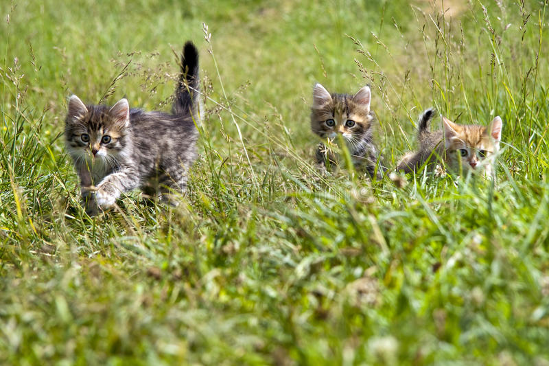 Download Kittens stock photo. Image of outdoors, playful, pets - 24642884