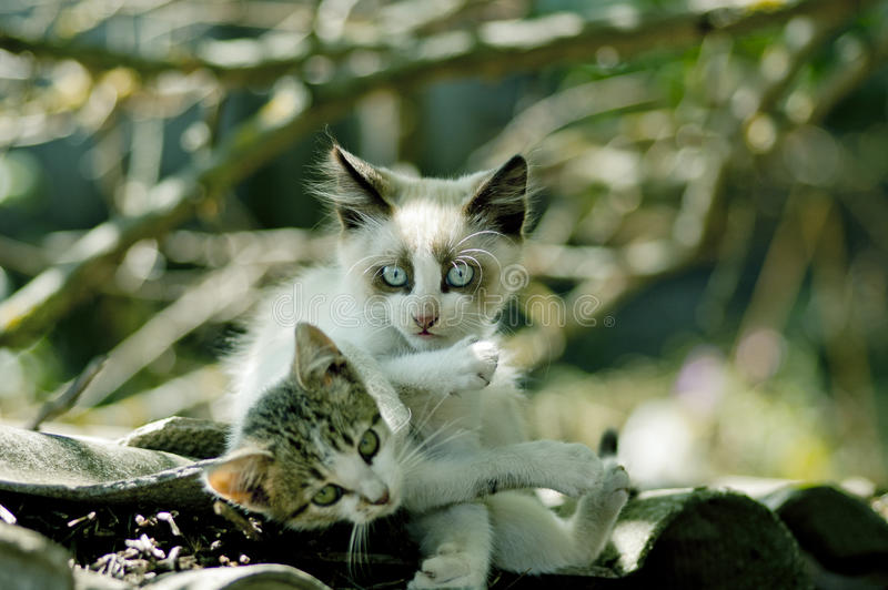 Download Kittens stock image. Image of animals, pampered, kittens - 26342627