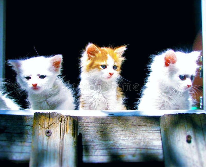 kittens fotografia stock