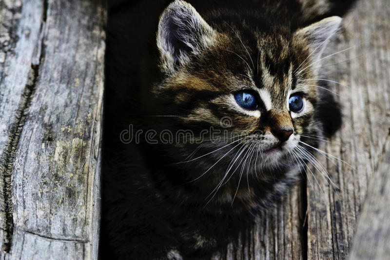 kittens immagine stock