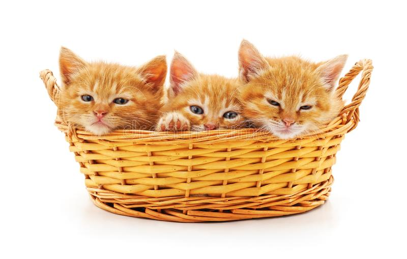 Kittens in a basket. Isolated on a white background stock photos