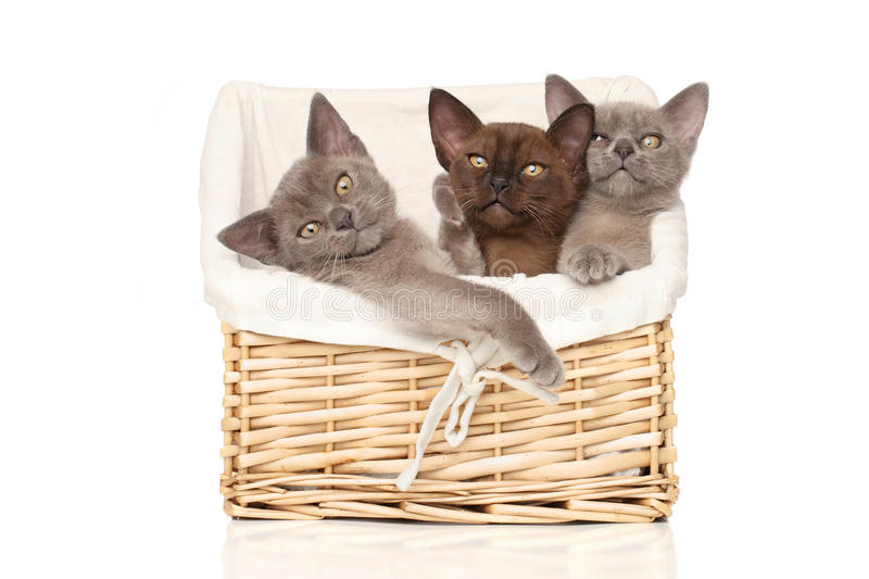Kittens in basket on a white background stock image