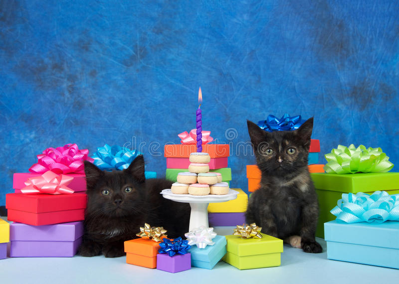Kittens birthday party miniature donut cake. Two black kittens sitting on a light blue surface surrounded by colorful birthday next to small white pedestal with royalty free stock photos