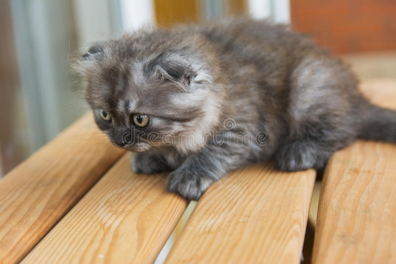 Kittens born in a private home. stock photos