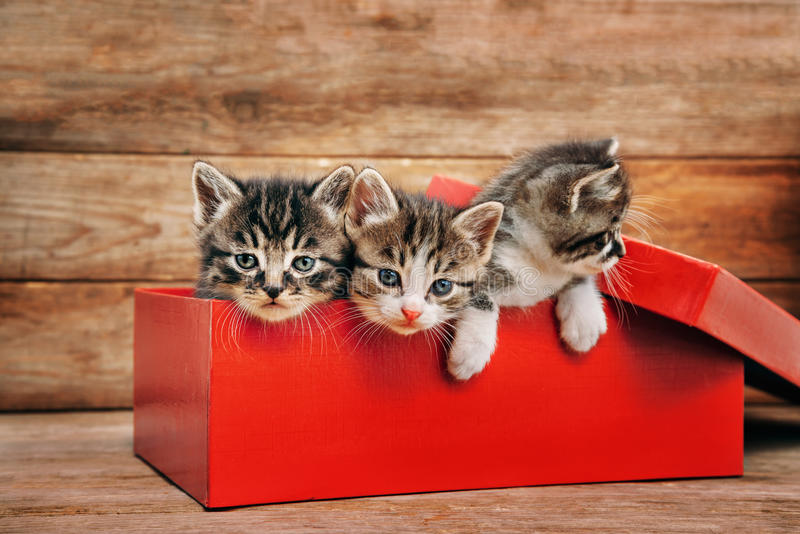 Kittens in the box royalty free stock image