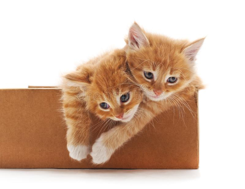 Kittens in the box. Kittens in the box on a white background royalty free stock images