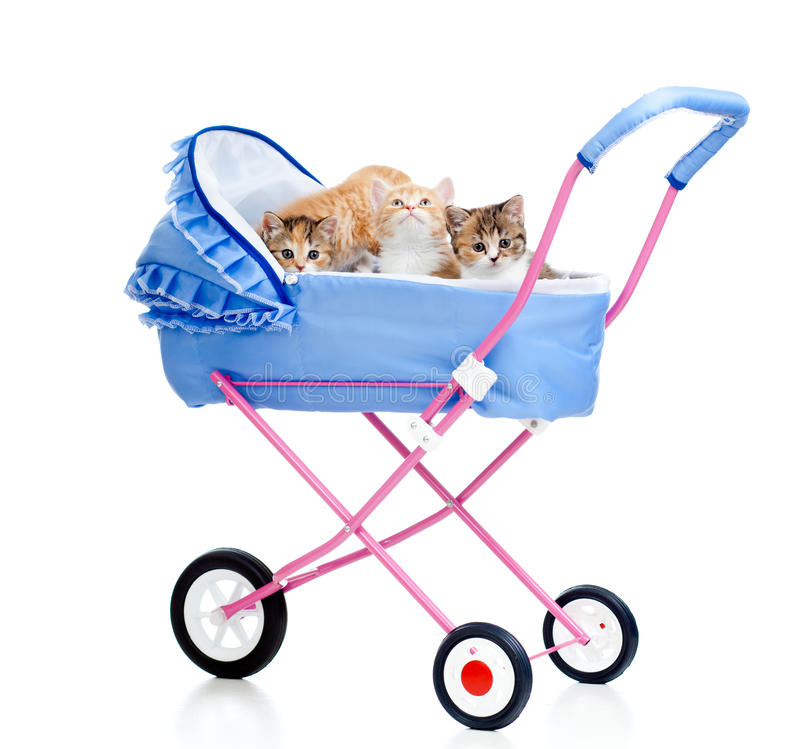Kittens in buggy stock photos