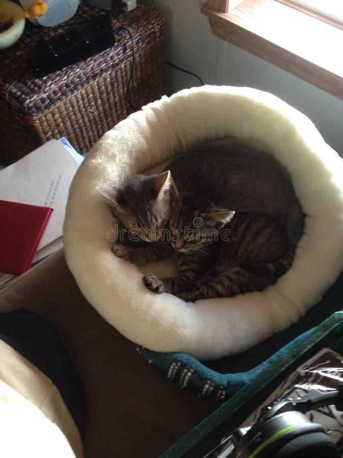 Kittens cuddling royalty free stock photos