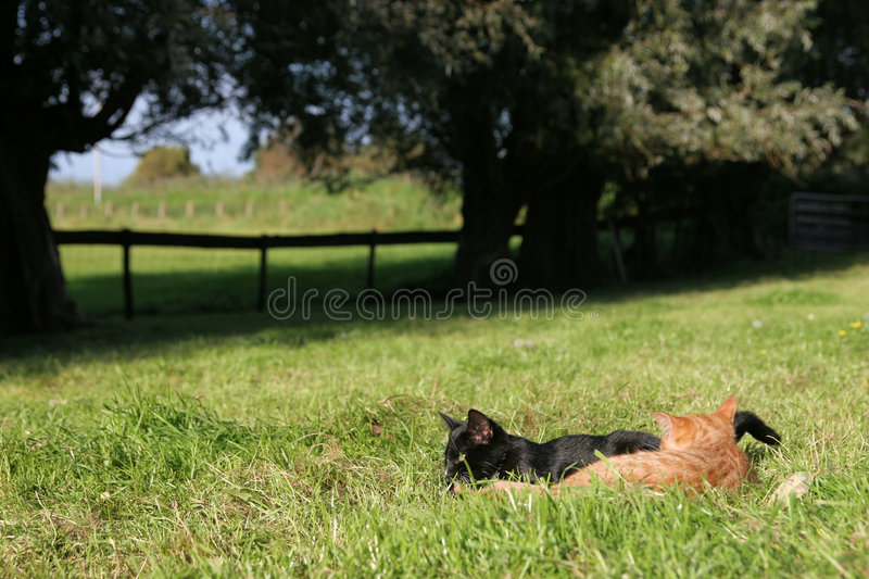 Kittens in the field stock photos
