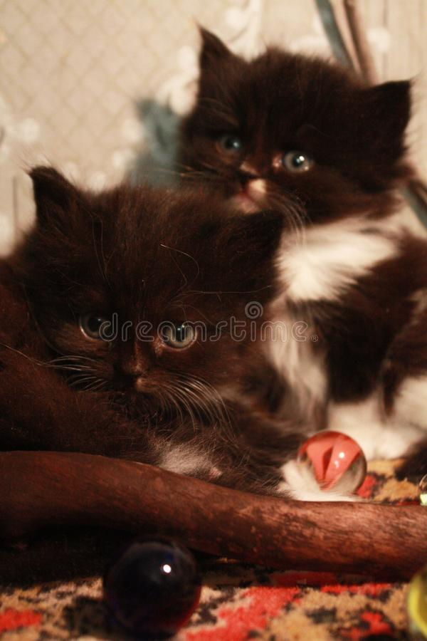 Kittens and glass balls royalty free stock image