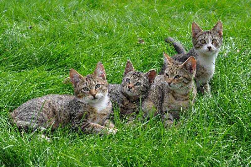 Kittens on the grass stock photos