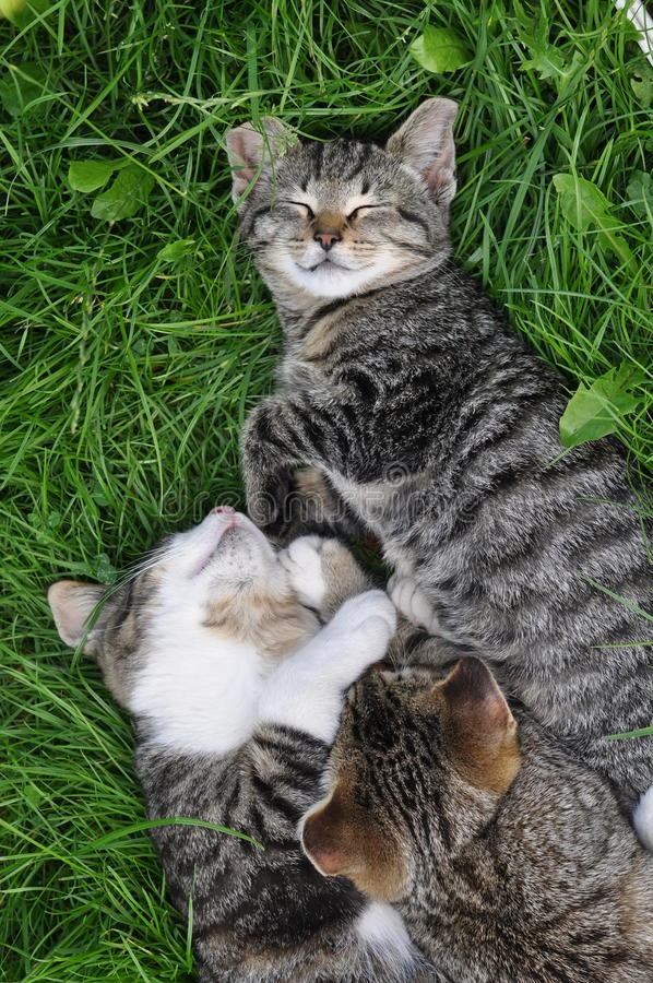Kittens on the grass royalty free stock image