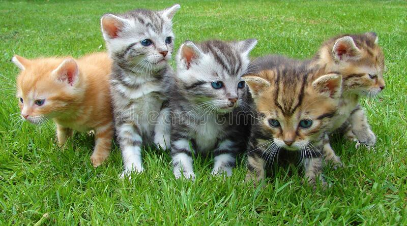 Kittens In Grass Free Public Domain Cc0 Image