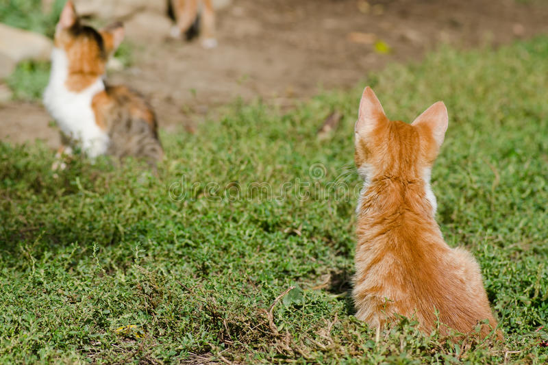 Download Kittens on the grass stock photo. Image of adorable, beautiful - 34061802