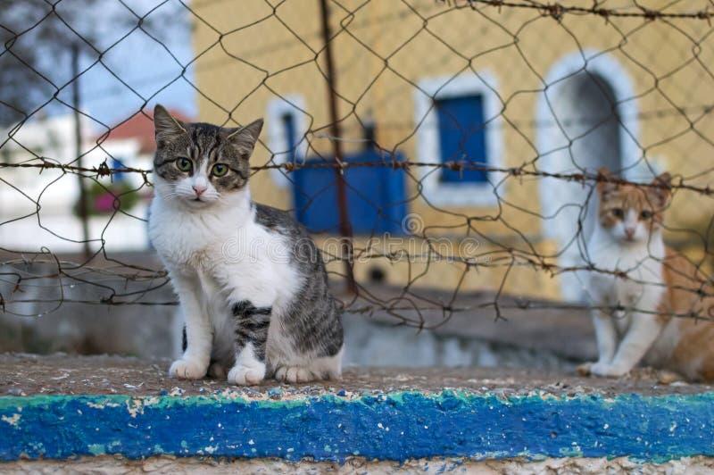 Kittens in a Greek island. View of cute kittens in a Greek island royalty free stock photos