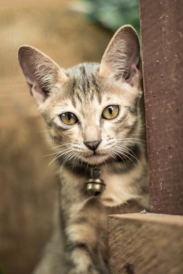 Kittens are looking at you. royalty free stock photography