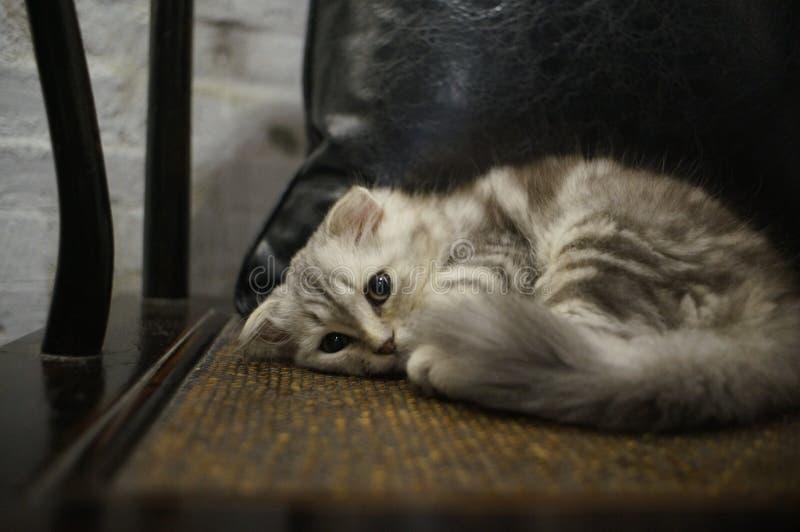 Kittens love to sleep. stock photo