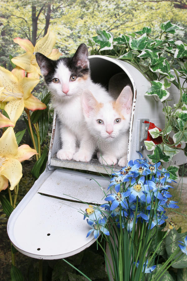 Kittens in a Mailbox stock image