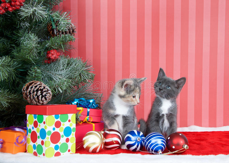 Kittens next to christmas tree with presents and ornaments stock image