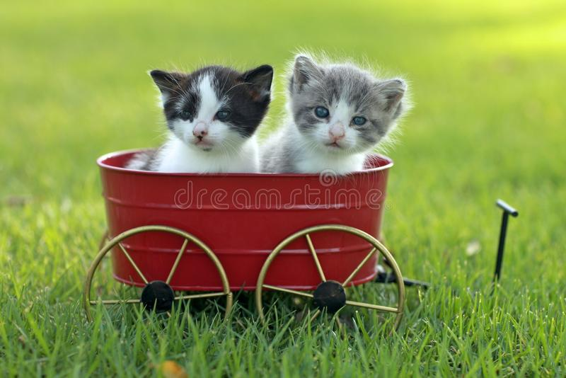 Kittens Outdoors In Natural Light Royalty Free Stock Photos