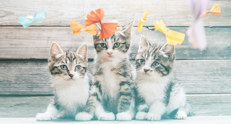 Kittens among paper bows stock photo