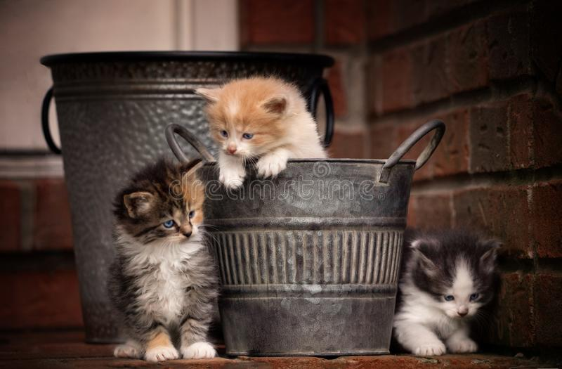 Kittens playing royalty free stock photography