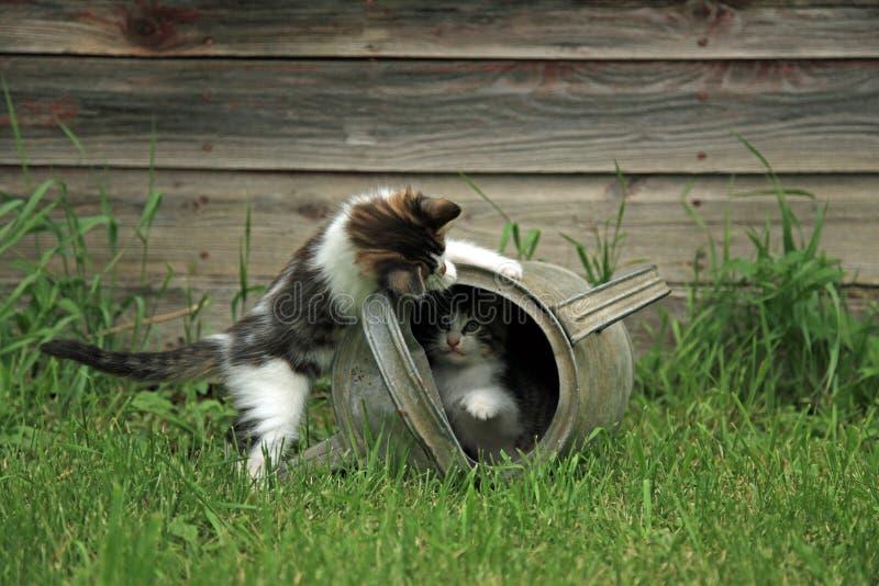 Kittens playing peek a boo stock image