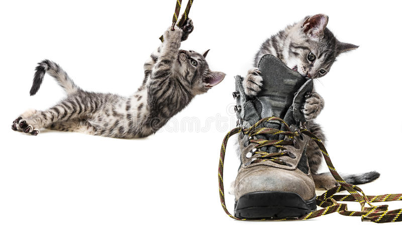 Kittens playing in shoes stock images