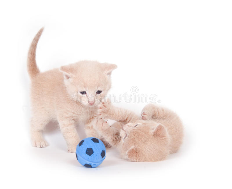 Kittens playing soccer stock photos