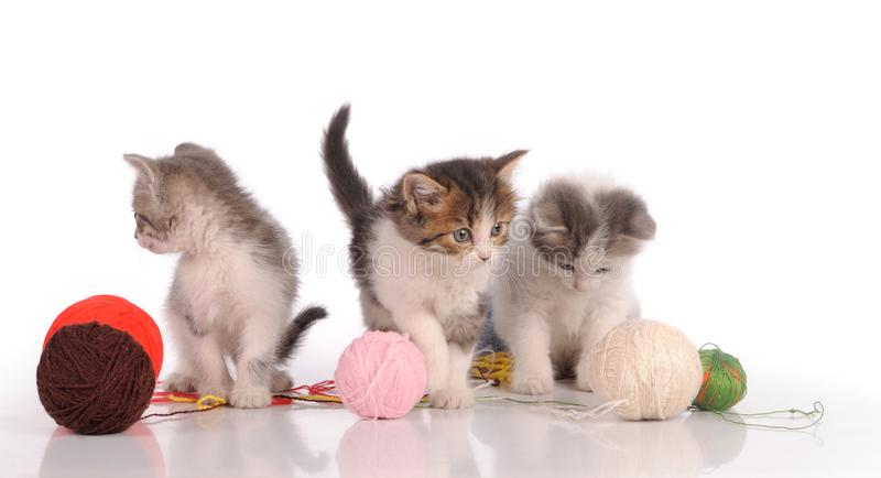 kittens playing with yarn ball, isolated on white stock images