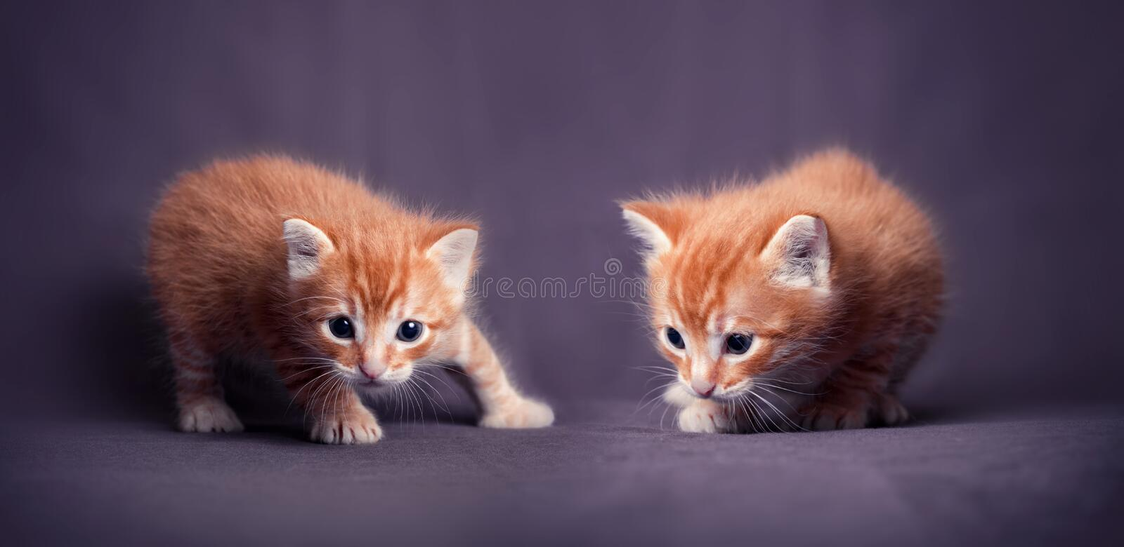 Download Kittens Portrait Stock Photo - Image: 25845780