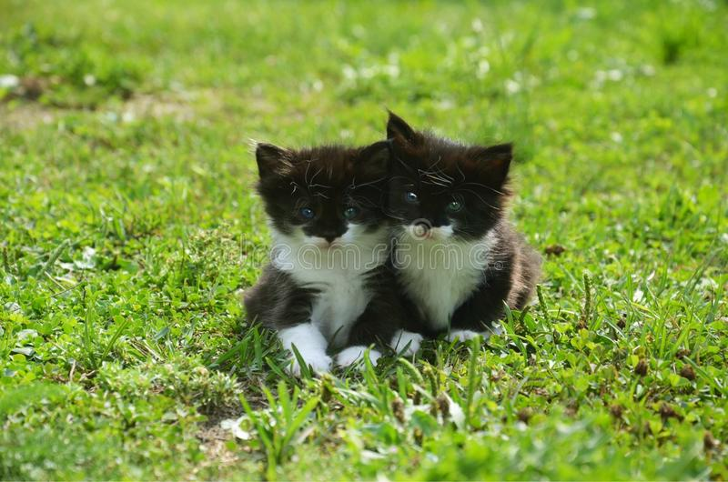 Kittens sitting in the grass stock images