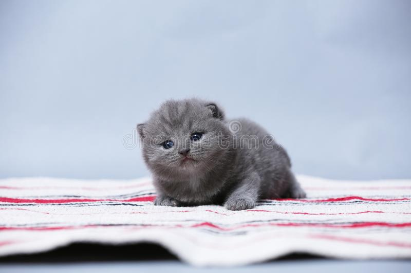 Kittens sitting on small carpet, cute face royalty free stock photo