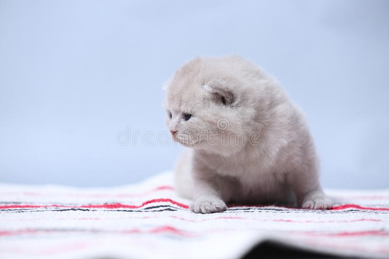 Kittens sitting on small carpet, cute face royalty free stock photos
