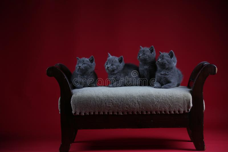 Kittens sitting on a vintage stool, wooden background stock photos