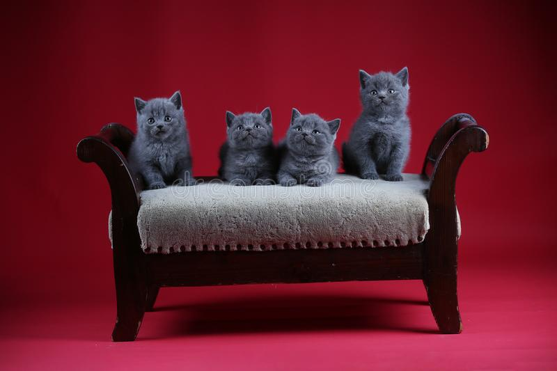 Kittens sitting on a vintage stool, wooden background stock images